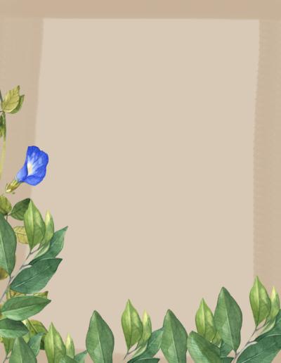 Botanical7